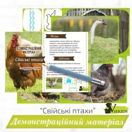 «Свійські птахи» демонстраційний матеріал+ картки-схеми